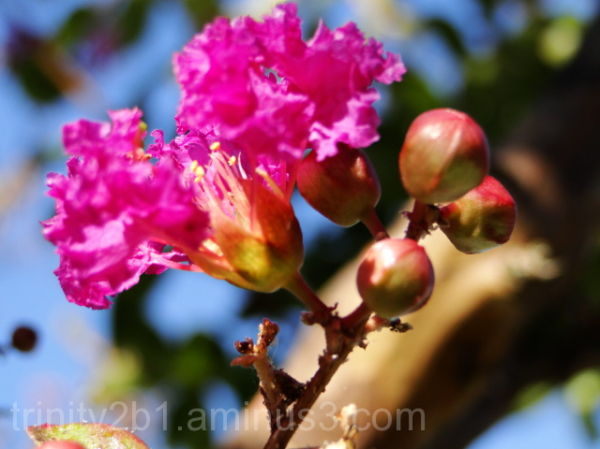 Pink Fall Flower