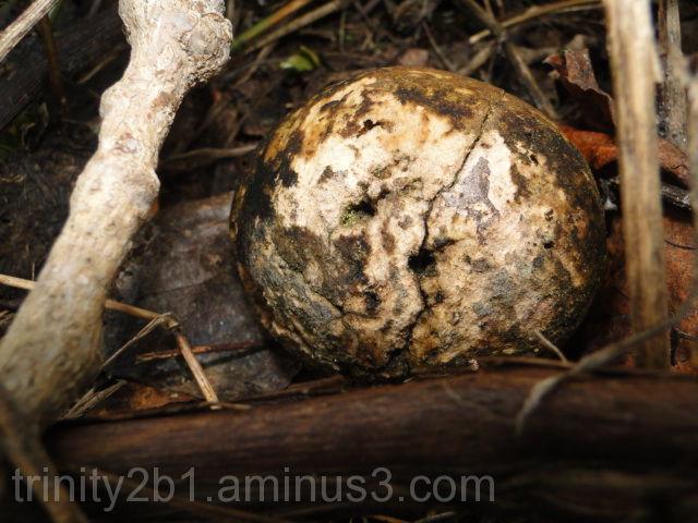 Tree Seed Pod