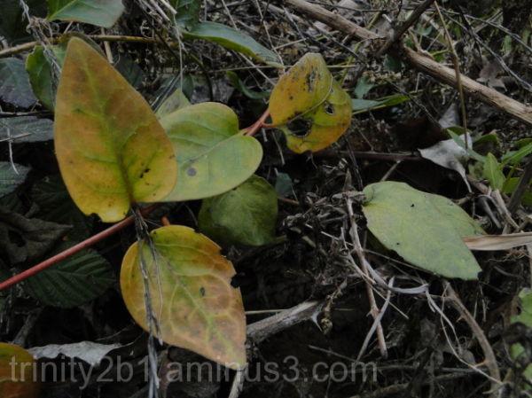 Interesting Leaves