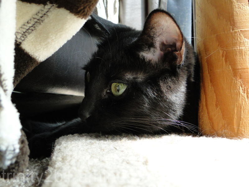 Kitty Profile