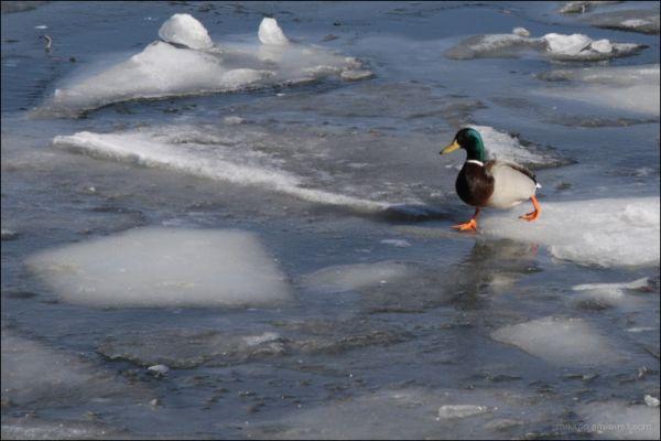 on ice