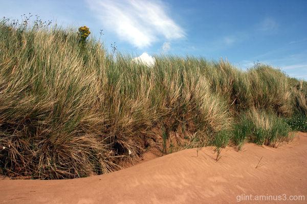 Sand and Ragwort