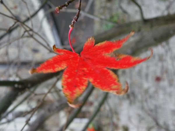Autumn in motion