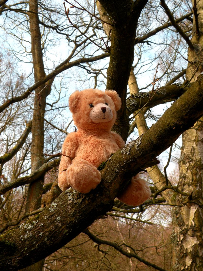 A lost teddy