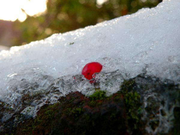 A Frozen Berry