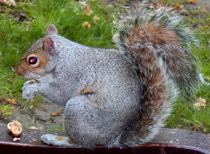 Squirrels Are Evil!