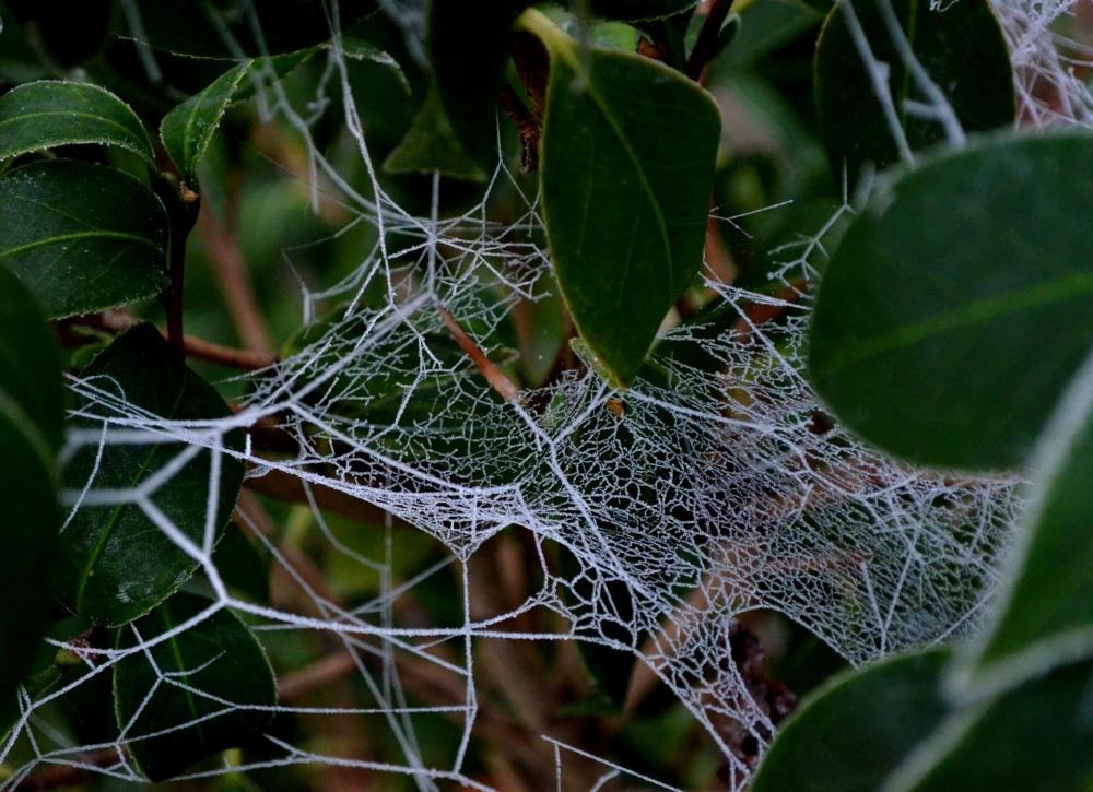 A Frozen Web