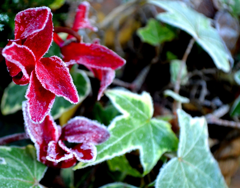 A Touch of Frost 3