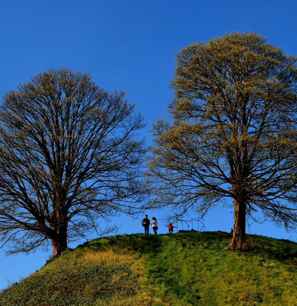 A Family on the Hill
