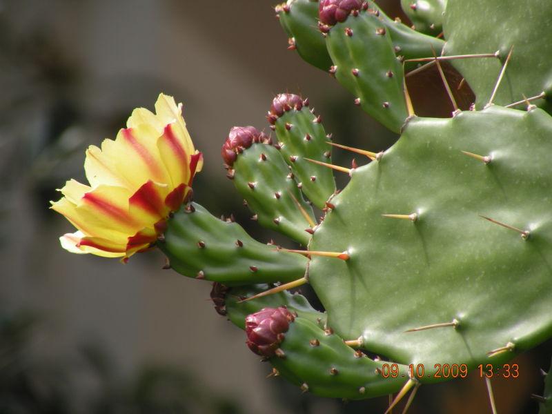 گل کاکتوس - Plant & Nature Photos - myda's Photoblog