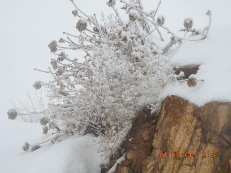گیاه در زمستان