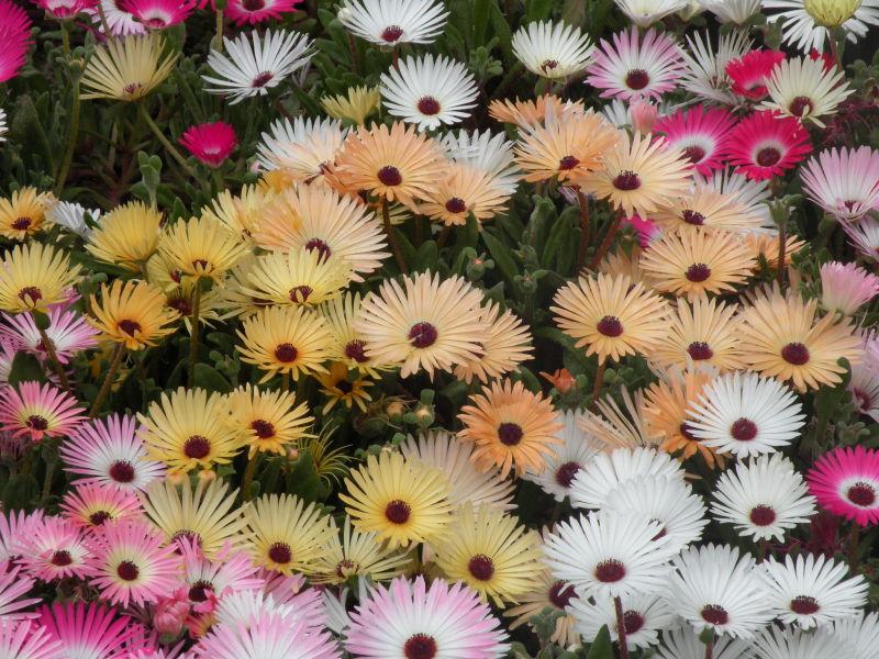 گلهای خورشیدی