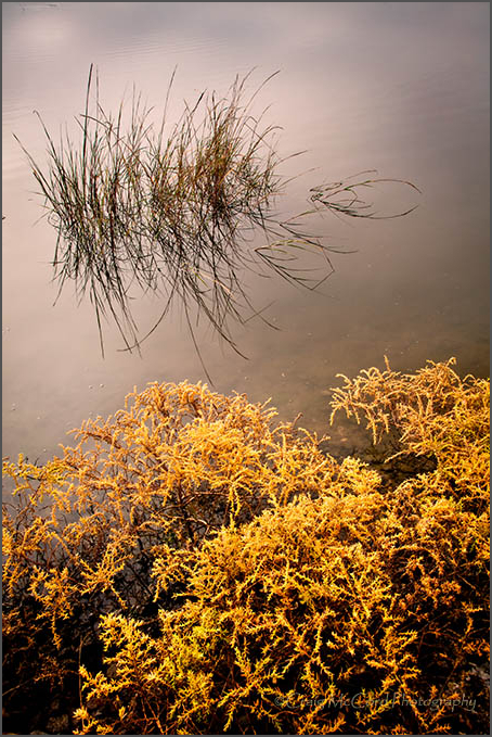 Marsh Grasses on the inland waterway, Mayport, FL