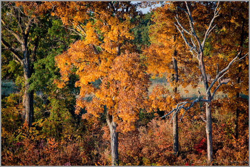 morning light on fall colors in rural Missouri