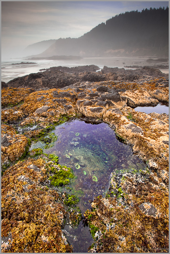 Strawberry Hill Tide Pool, Strawberry Hill, OR