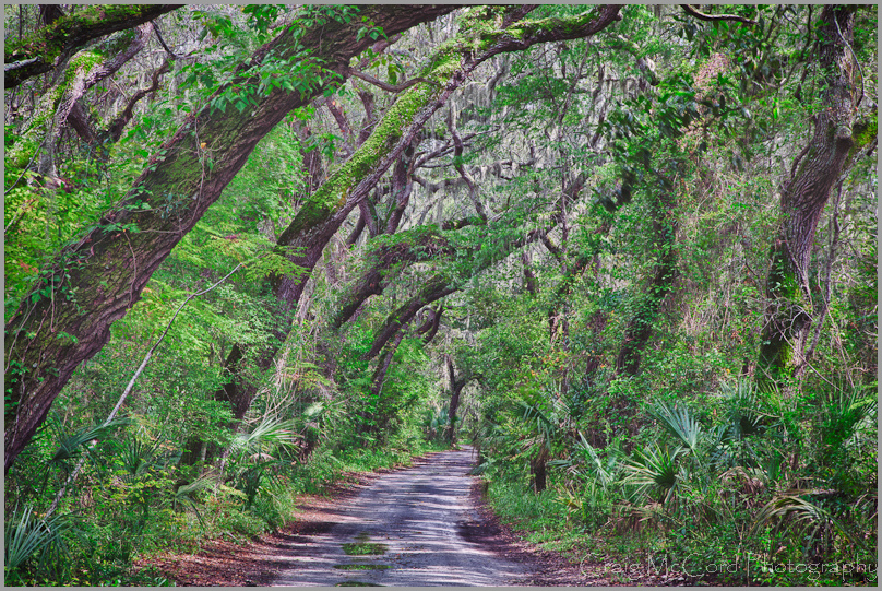 Road to Kingsley Plantation