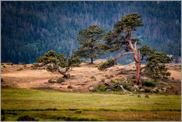 Meadow Pines, Rocky Mountain National Park