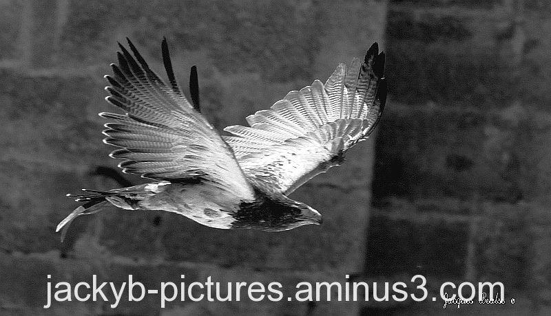 Eagles, Aigles