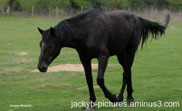 Cheval, Horse