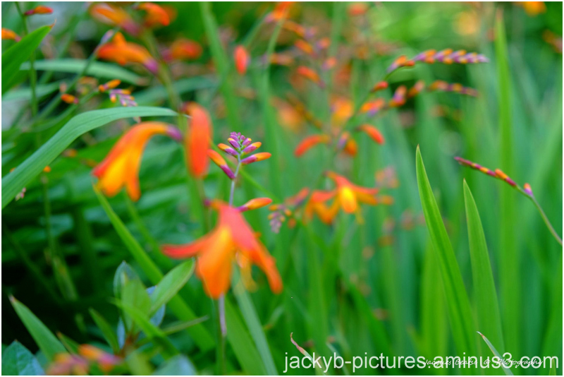 Orange, couleur, plante, fleur, bouquet