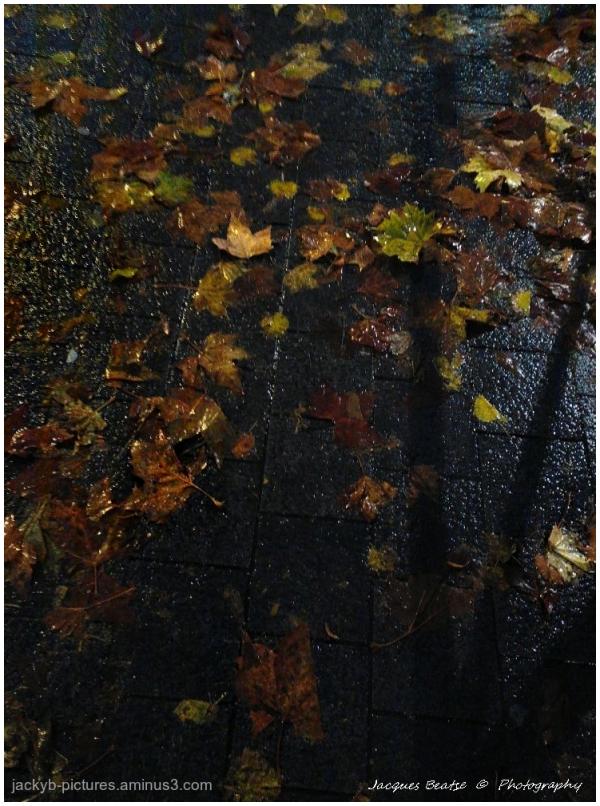 Quand les feuilles tombent