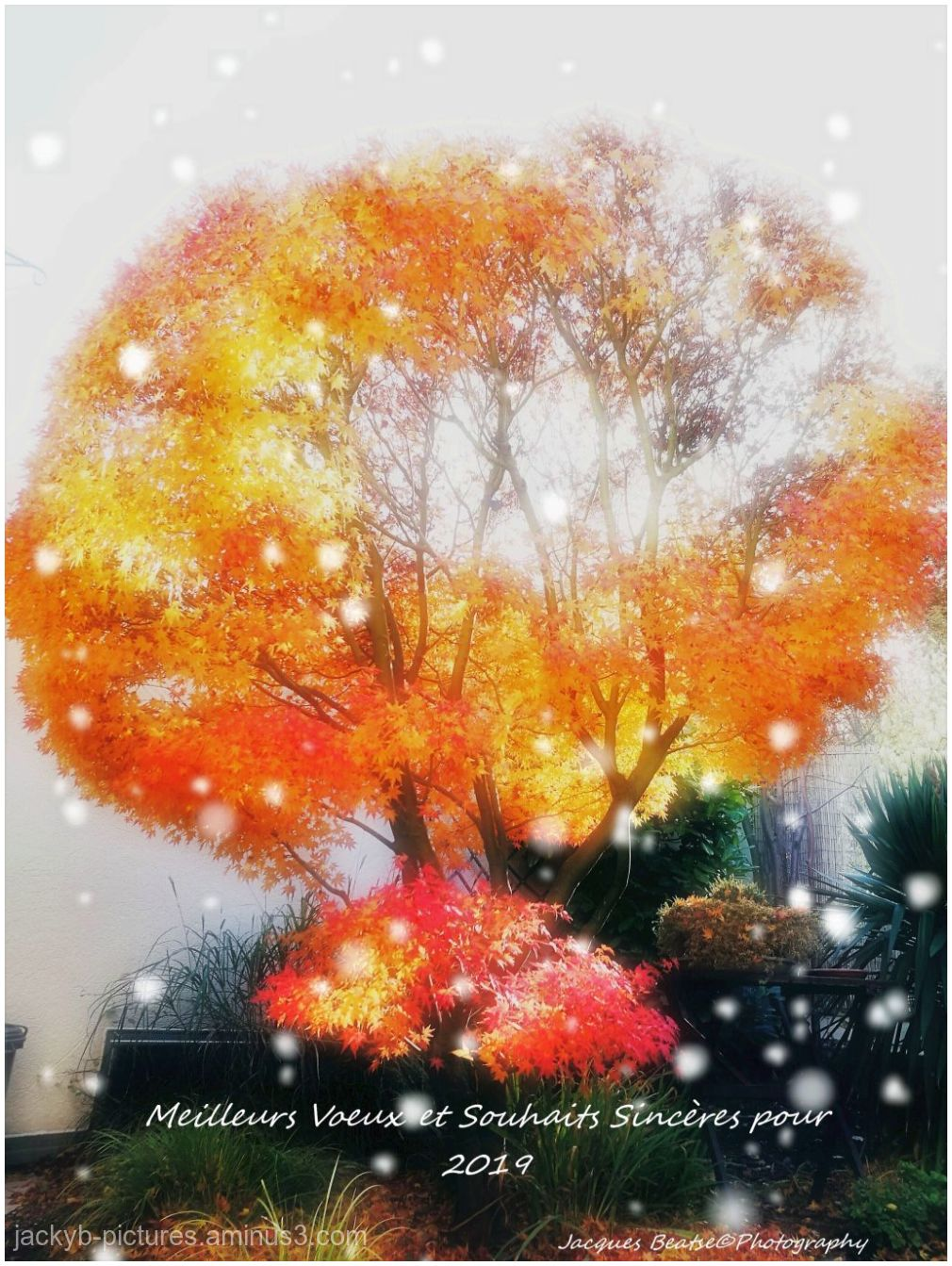 Merry Christmas & Happy New Year 2019  ♥