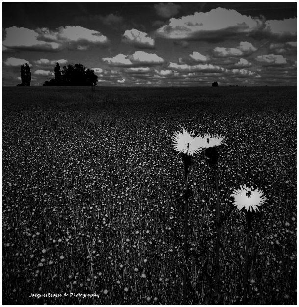 Black & White Dreams ♥
