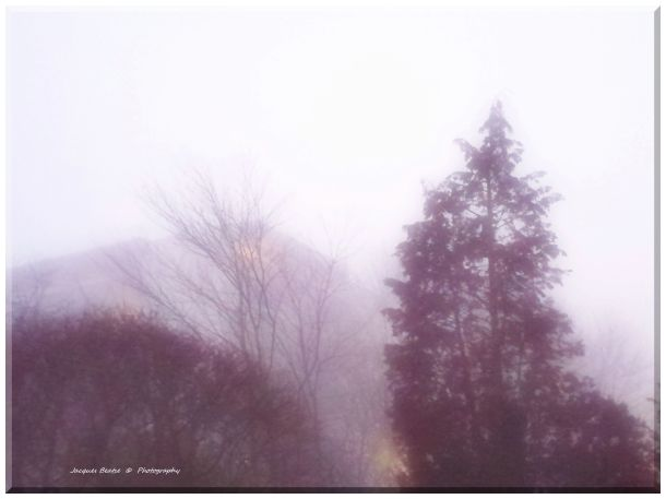 Fog Dreams