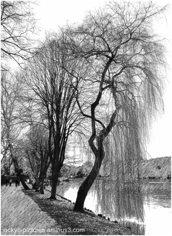 Le saule pleureur Salix babylonica Monet peinture