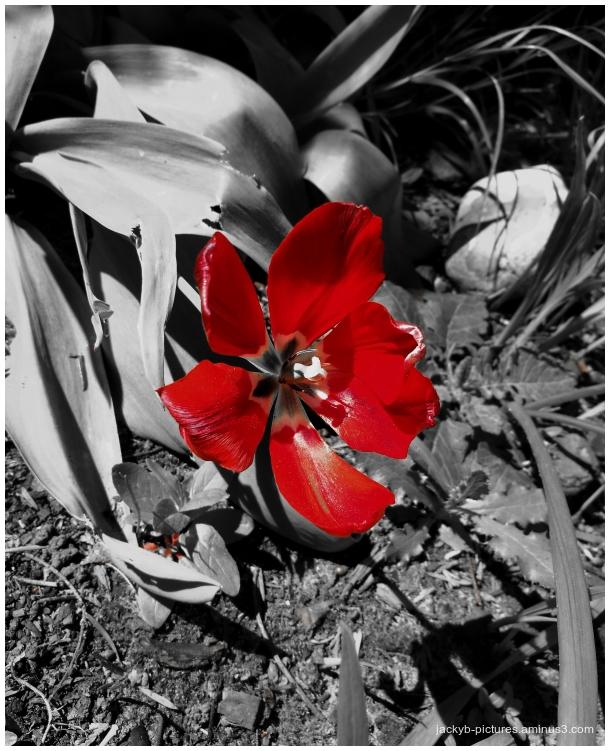 A little red touch... Une petite touche de rouge..