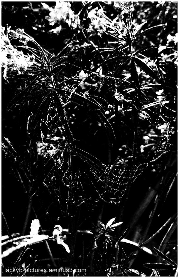 What a surprise a Alien visit my garden... ♥