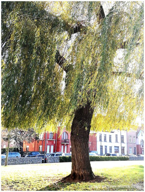 Quand la vie est un arbre.. de Jacques Prévert !