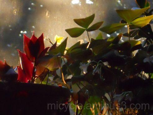 Sunrise lighitng up plants in a window