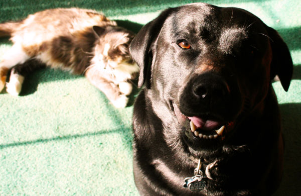 My dog and cat relaxing in the sun light