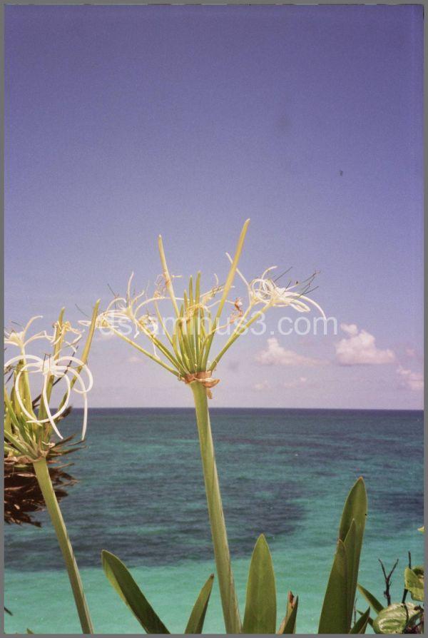 Caribean Tulum Beach
