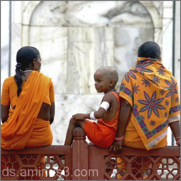 Taj Mahal orange family