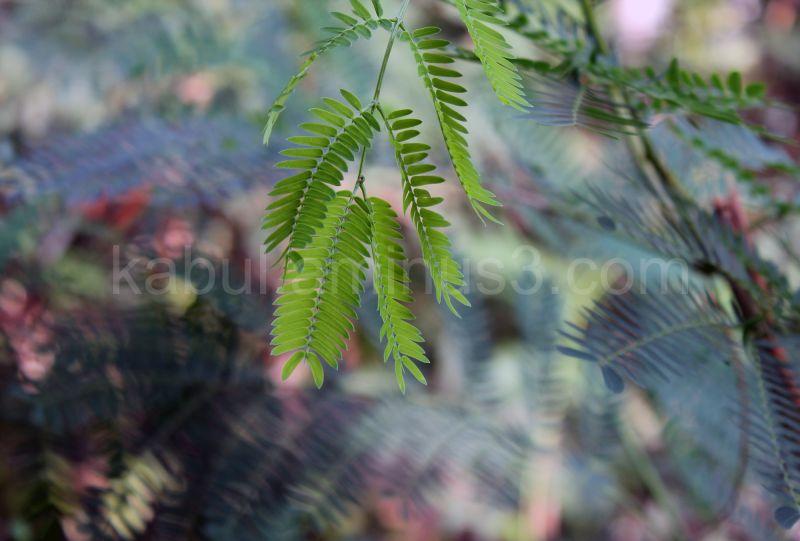 Leaf on focus