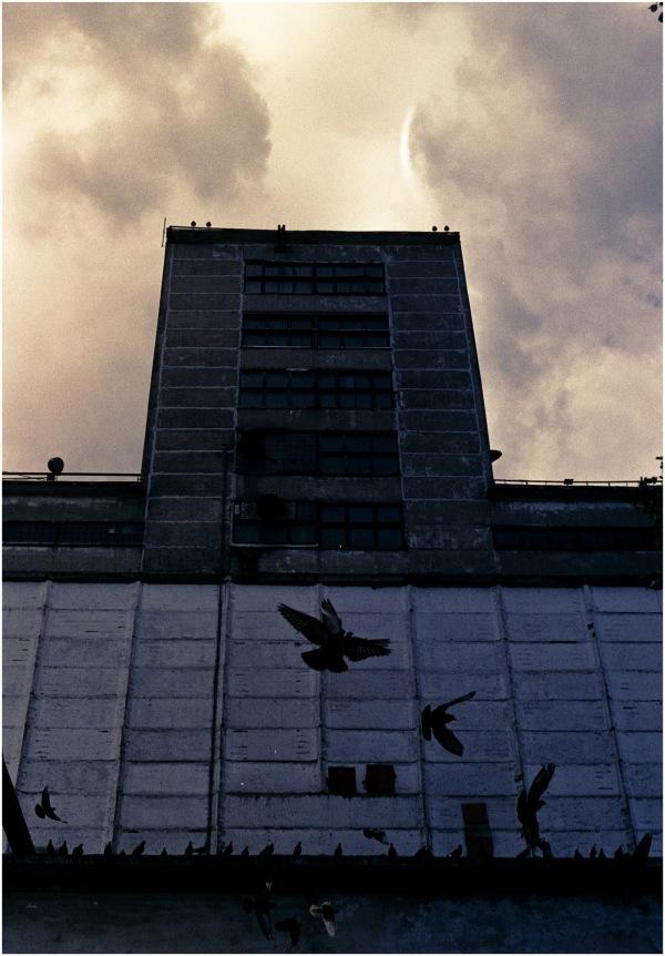 Quand les Hommes s'en vont, les pigeons dansent