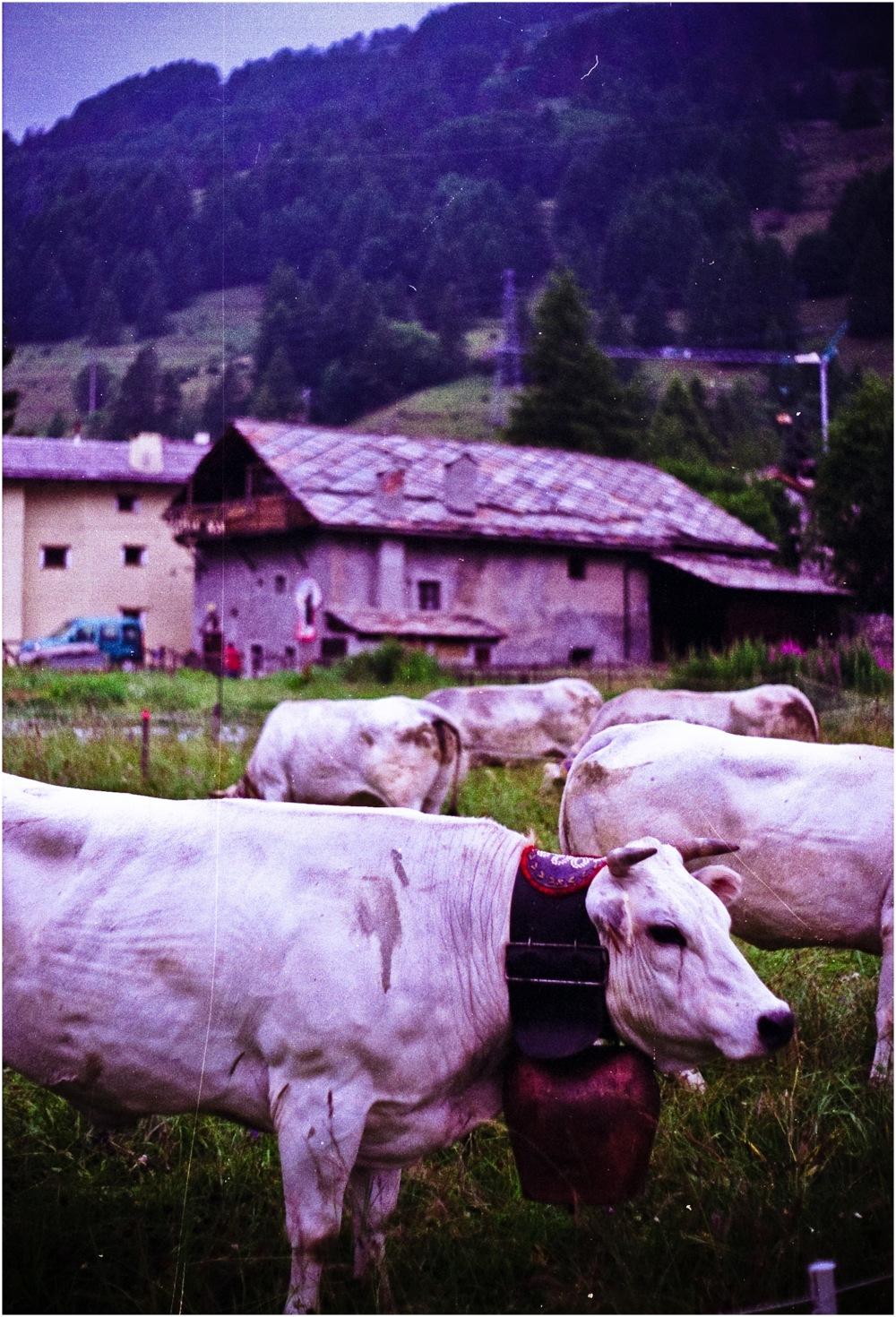 La blanche des Alpes