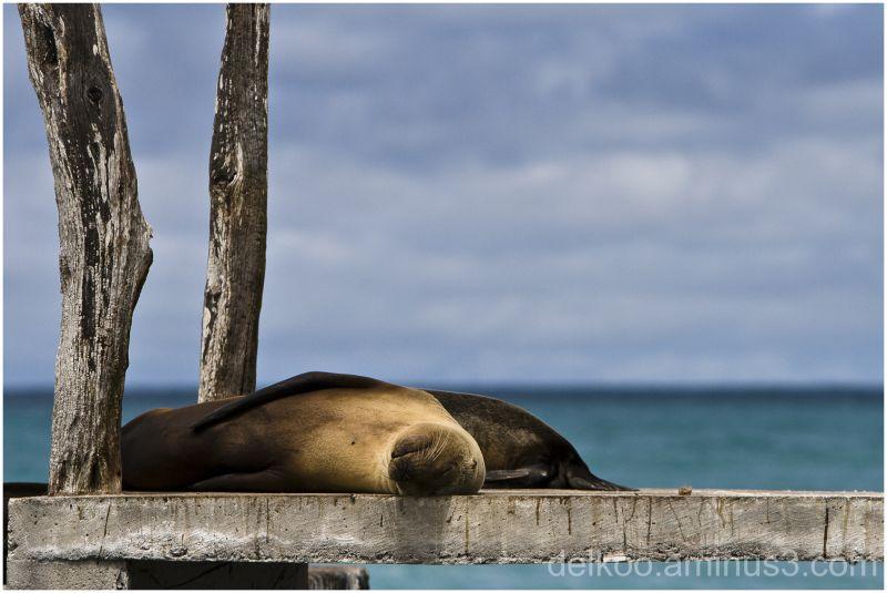 sea lions at sun