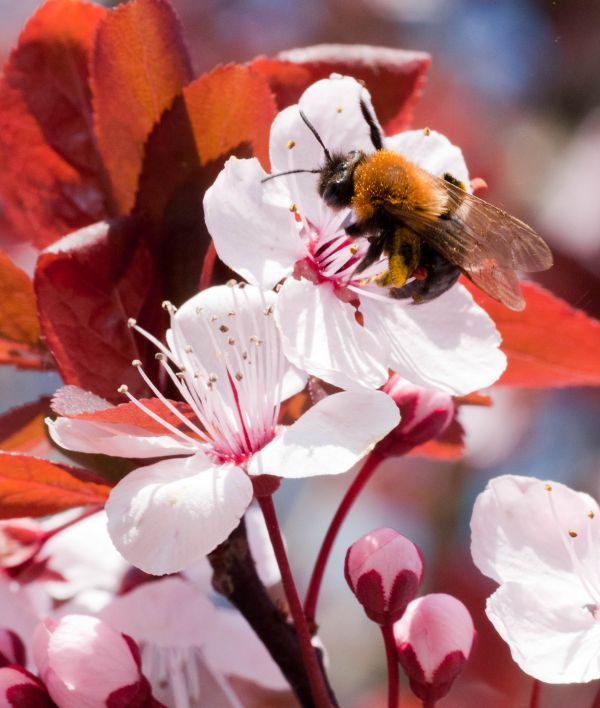 Macro, abeja