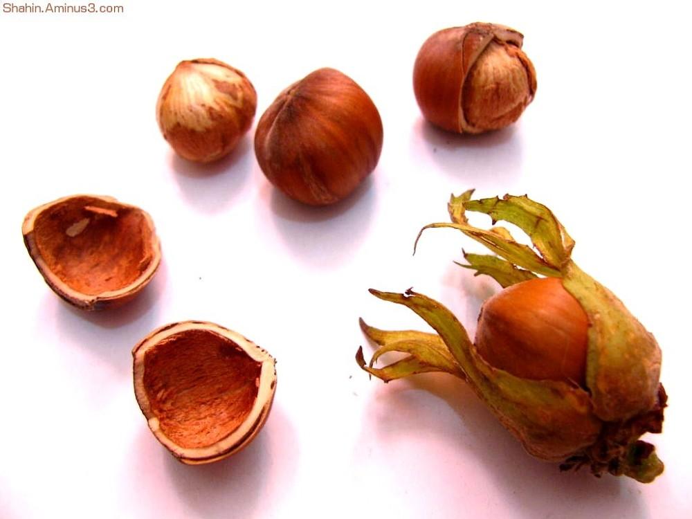Hazel-nut 02