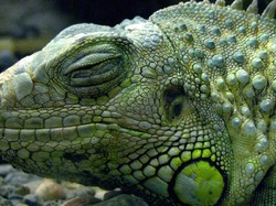 Salamander 02