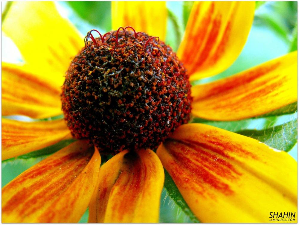 Flower 11