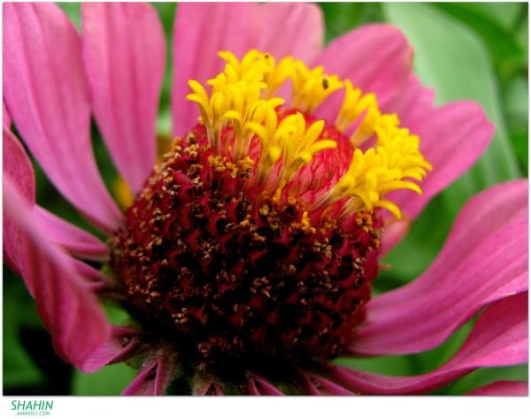 Flower 48