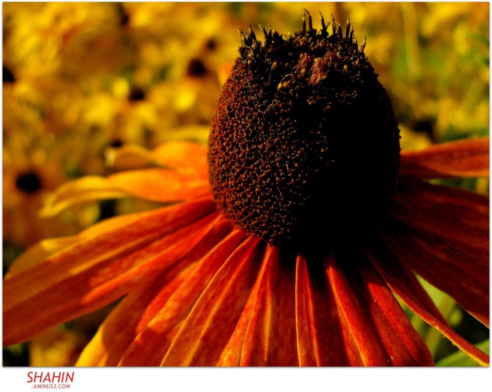 Flower 51