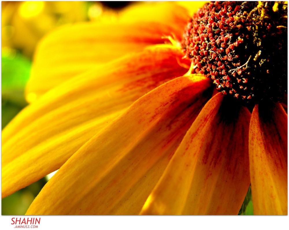 Flower 55