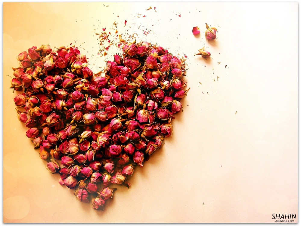 Happy Valentine's Day, Valentine
