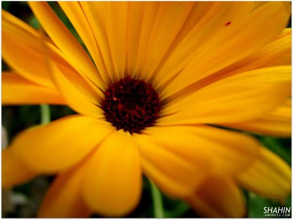 Flower 60