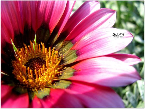 Flower 62